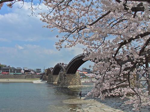 Kintai-kyo Bridge Iwakuni And Sakura
