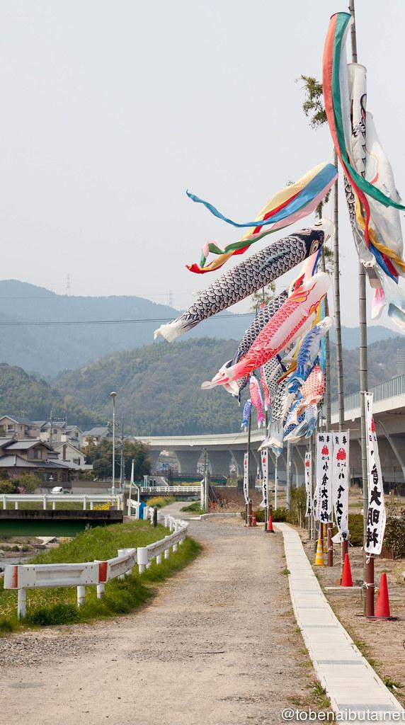 小泉川の鯉のぼり