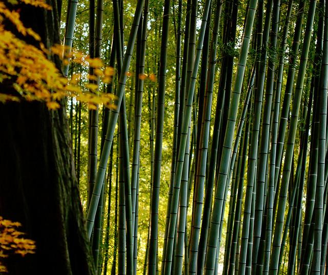 Bamboo, Kyoto