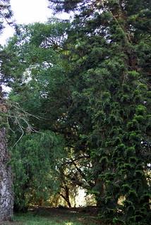 صورة Botanical Garden قرب بورتو أليغري. botanicalgarden