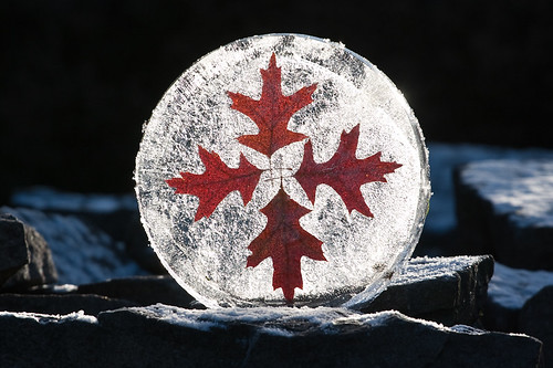 Red Oak Ice Disc