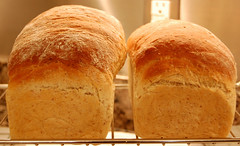 baking, bread, baked goods, ciabatta, food, bread roll, sourdough,