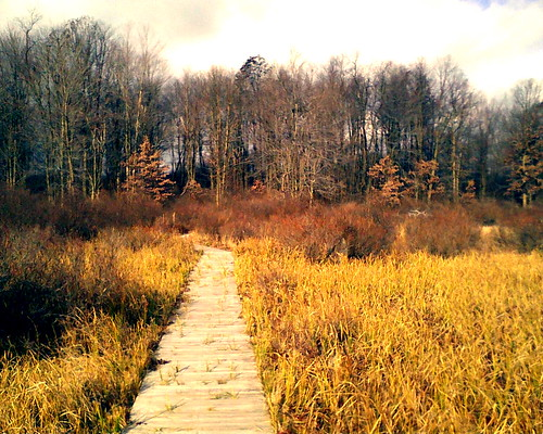 park moss state trail boardwalk blackmoshannon mosshanne