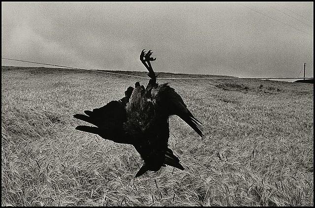 Ireland, 1978, by Josef Koudelka