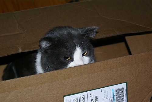 A-cat-and-his-box