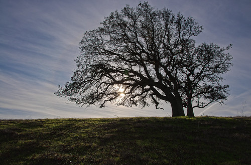 morning nature silhouette sunrise landscape oak blackoak oaktree delvalle delvalleregionalpark blackoaktree ebparksok