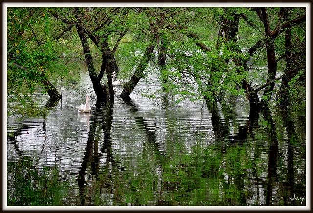 Vedanthangal - Bird Sanctuary (near Chennai, India)