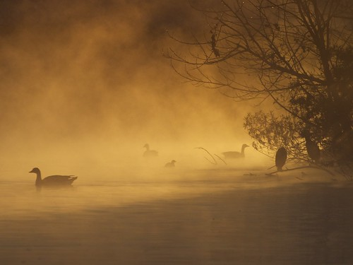 california usa lake heron birds silhouette fog dawn la losangeles olympus goose e3 70300mm zuiko grebe 2011 zd sepulvedabasinwildlifereserve aperture30 gisuggested