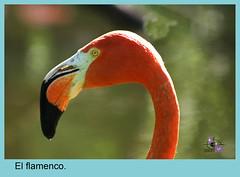 wing(0.0), toucan(0.0), animal(1.0), fauna(1.0), close-up(1.0), beak(1.0), flamingo(1.0), bird(1.0),