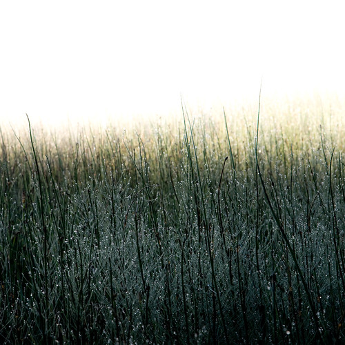 misty fog sunrise switzerland twilight bright swiss foggy jura dew etangdelagruère