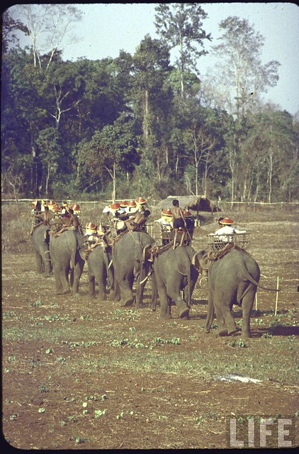 Mountaineers on elephants en route to New Year's celebration
