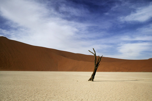 life africa trees shadow sky sun hot tree sahara landscape sand warm desert dune tranquility heat sanddune barren sesriem namibia arid isolated sanddunes sossusvlei deadvlei namibdesert acaciatree reddunes namibnaukluftnationalpark areyarey
