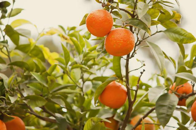 Naranjas II