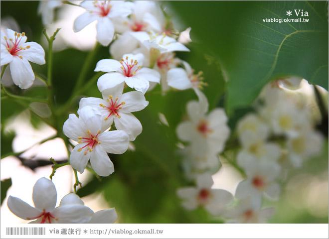 【桐花2014】南投油桐花景點~牛耳石雕藝術渡假村賞桐趣21