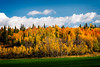 Fall Colors along the Yellowhead