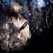 Wonderland : Moondial by Kirsty Mitchell