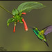 Western Emerald by Glenn Bartley - www.glennbartley.com