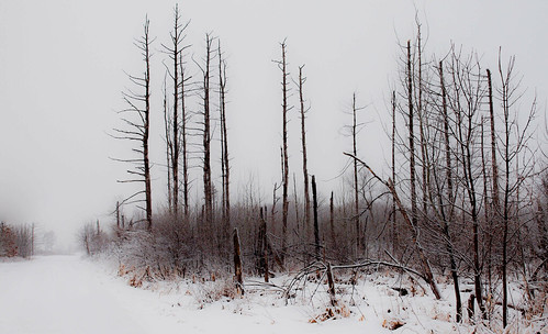snow minnesota fire ethereal bleak forestfire stark