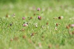 Hierba / Grass