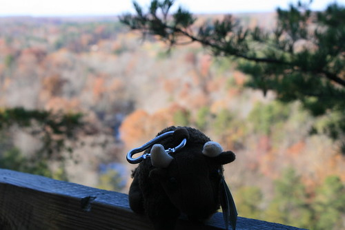 Buddy on top of Occoneechee Mountain!