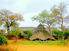 South Africa. Royal Legend Safari Lodge