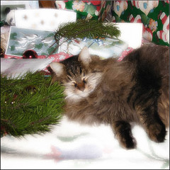 Cozy Cat of Christmas Past....coming round again this year....