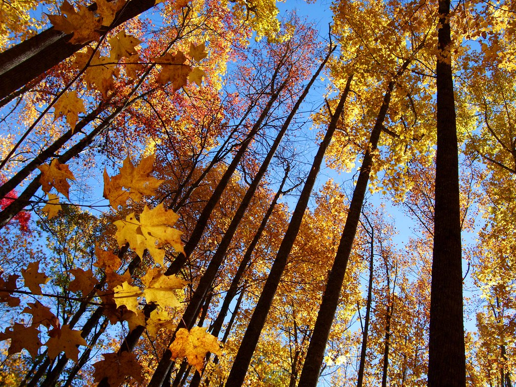 Fall Leaves On The Appalachian Trail