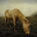 Equus by Skeletalmess