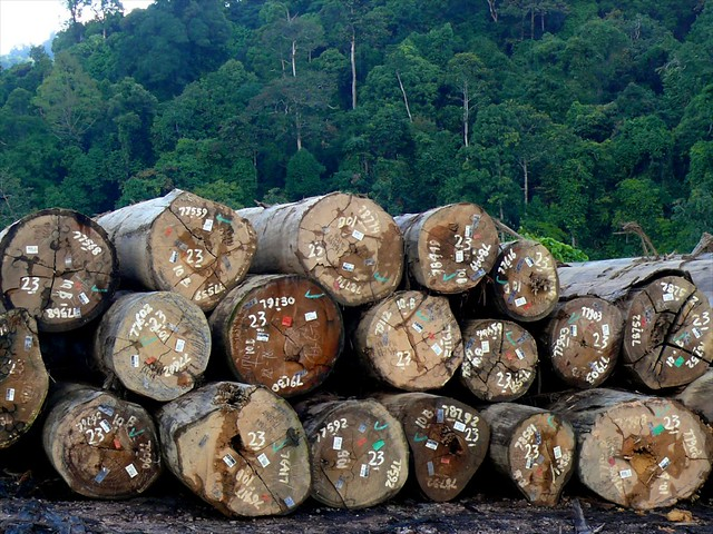 Logging in Kalimantan, Indonesia.