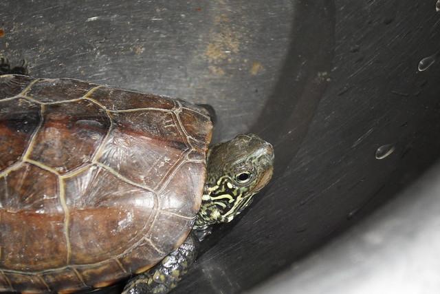 回家路上捡到的小乌龟