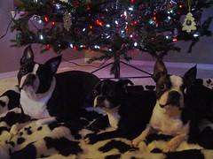 "Dec 24, 2010 [Day 53] ""Waiting For Santa"""