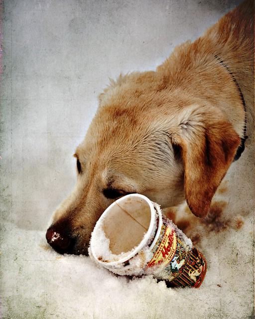 Header of A Dog's Breakfast