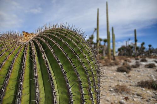 cactus nature mexico nikon desert d90