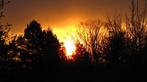 trees sun cold color sunrise january