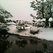 Small photo of Japanese people in a park