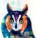 owl by alvaro tapia hidalgo