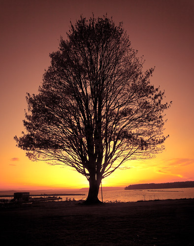 sunset sun color tree silhouette canon golden colorful nd brilliant lonetree lightroom cokin gnd goldensun brilliantcolor 1740mmf40l 5dmk2 travislawton travislawtonphotography