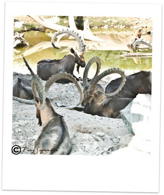 Header of Al Ain Zoo