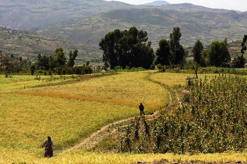 Low fertile land for Fertile soil 07