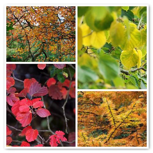 uk autumn england leaves fdsflickrtoys nationaltrust eastsussex potofgold sheffieldparkgarden natureplus firsttheearth esenciadelanaturaleza newphotodistillery