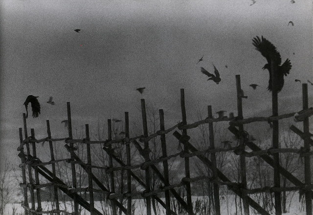 Nayoro, 1977 - from The Solitude of Ravens, by Masahisa Fukase
