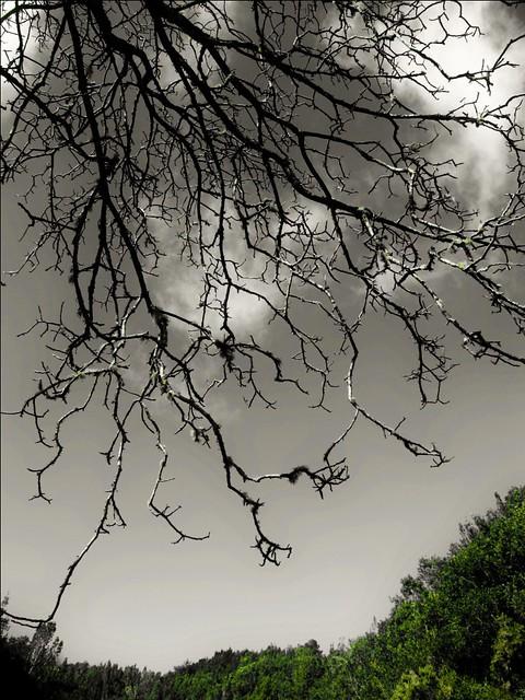 Nature is perfect (La Palma)