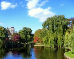 Boston 2010 Public Garden