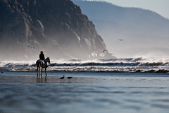 Lone female Equestrian at water's edge by Morro Rock