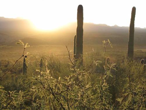 arizona usa cacti landscapes flickr desert unitedstatesofamerica gps 2010 saguarocactuscarnegieagigantea