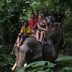 Khao Sok Ausflüge mit Elefantenreiten
