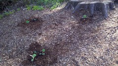 garden(0.0), grass(0.0), yard(0.0), lawn(0.0), soil(1.0), tree(1.0), mulch(1.0),