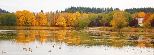 autumn oregon fallcolor vernonia vernonialake