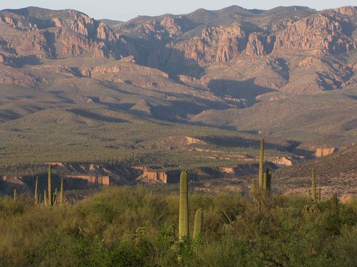 arizona usa mountains cacti landscapes desert unitedstatesofamerica gps 2010 panoramio saguarocactuscarnegieagigantea