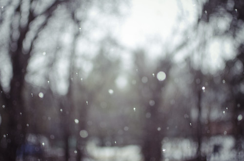tiny snowflakes by NaturesEssence